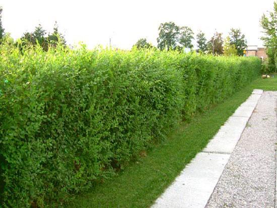 Uredjenje bašte i vrta Sil Club