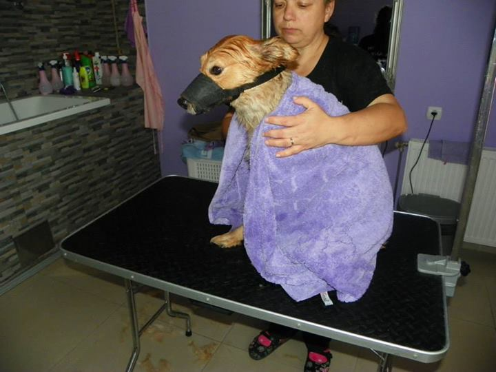 Pet salon Tiffany