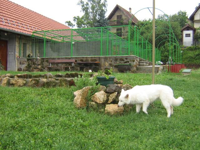 Pansion za pse i mačke Životinjsko Carstvo