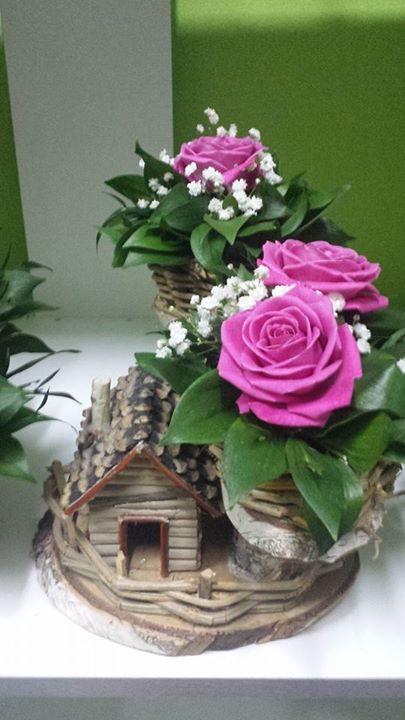 Cvećara Divlja Orhideja