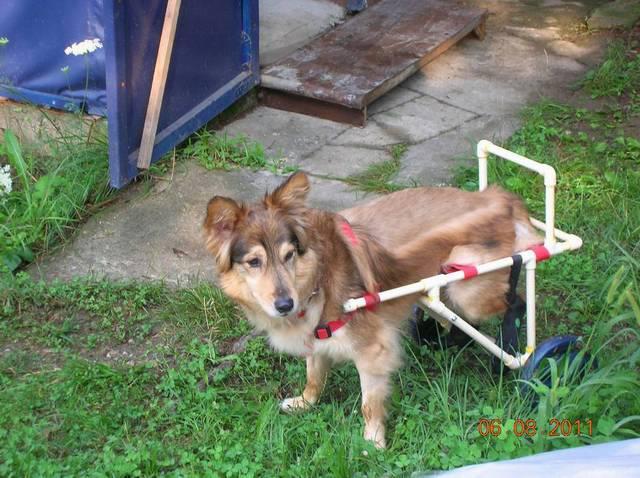 Izrada kolica za pse – Dragan Dimitrijević