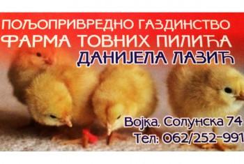 Farma tovnih pilića Lazić