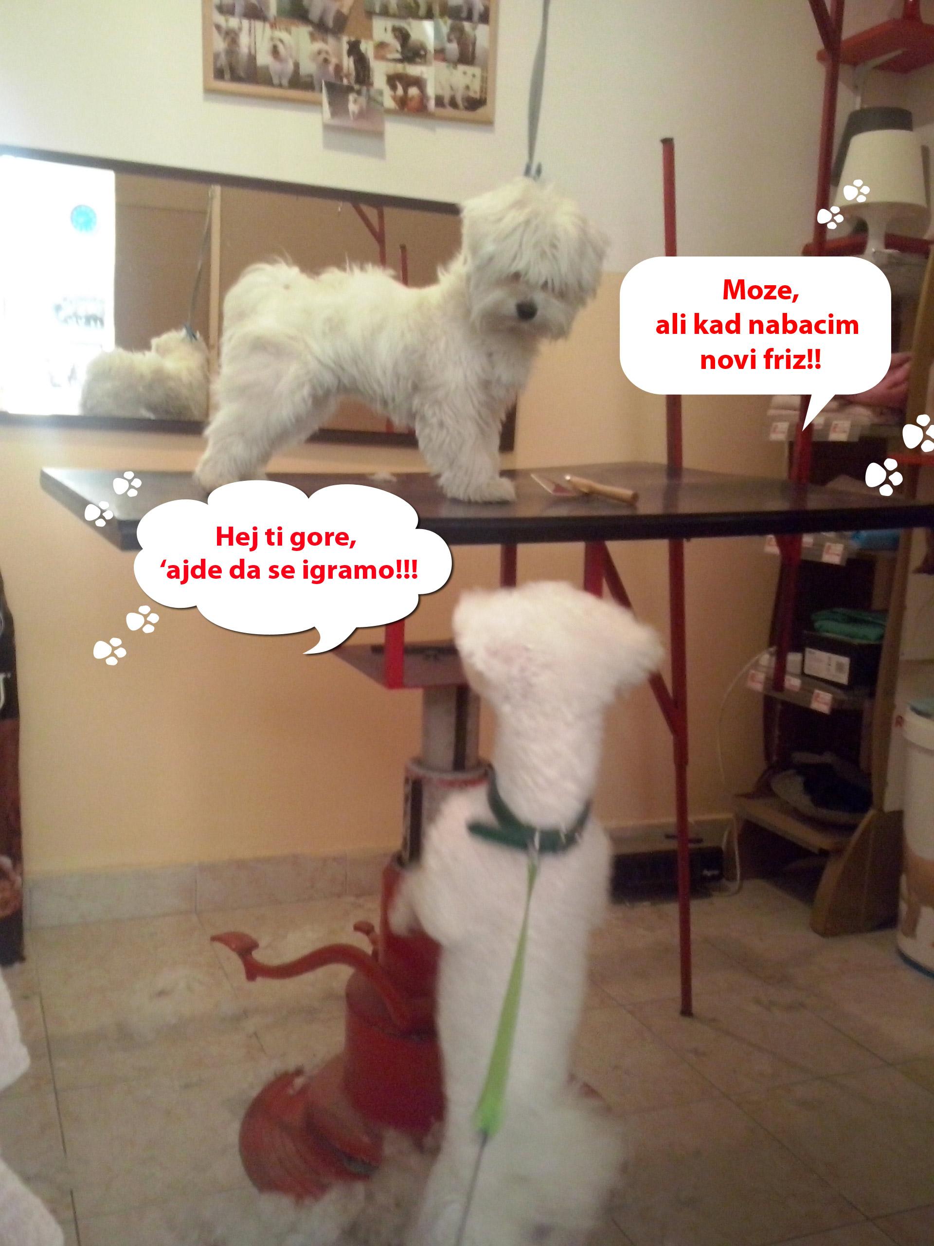 Veterinarska ambulanta i šišanje pasa Pet House