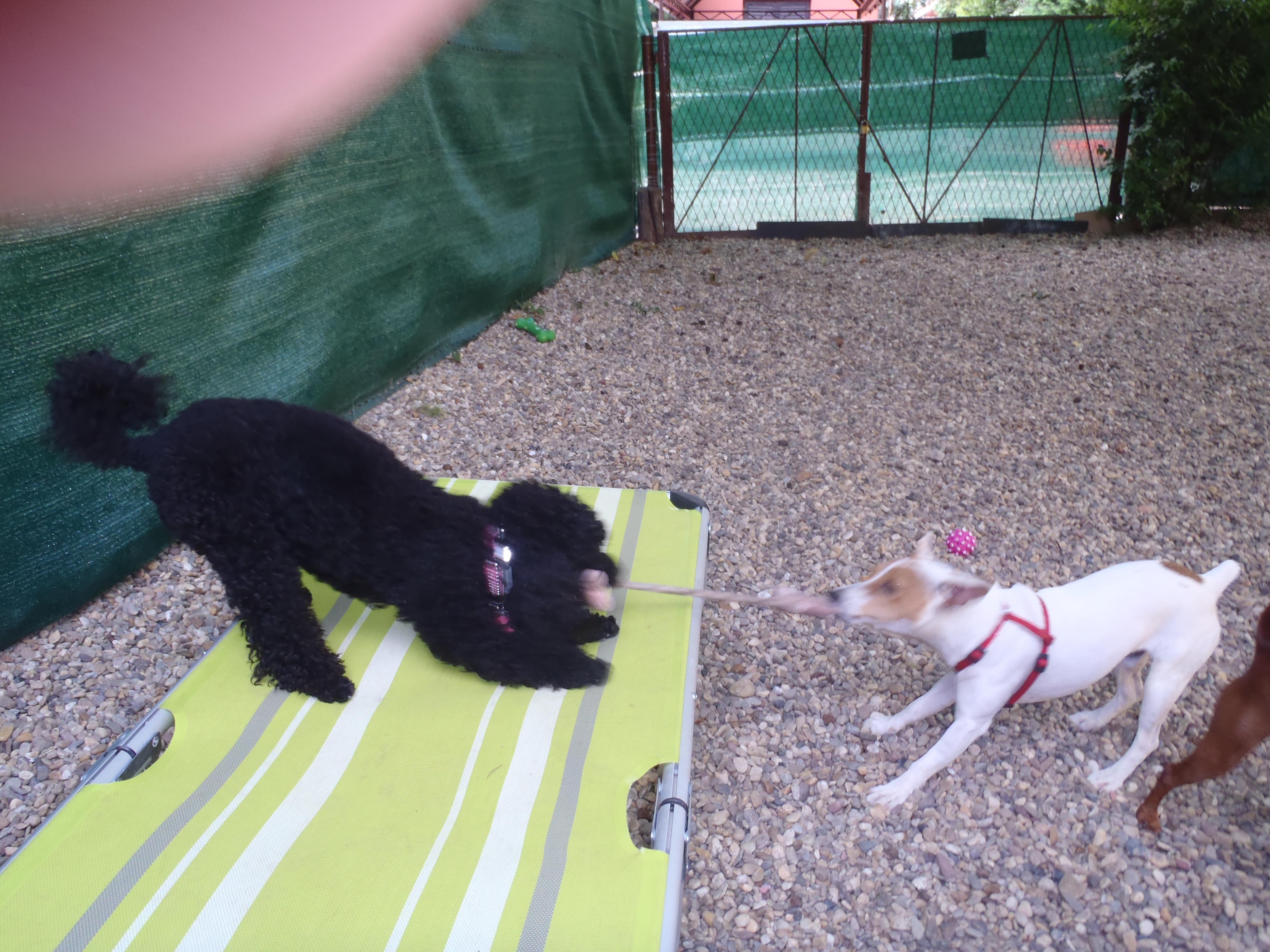 Pansion za pse malih rasa Golden Pets Hotel